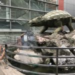 Dinosaurs are a real business at Henan Geological Museum